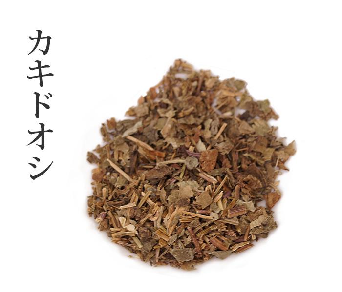 カキドオシ連銭草(れんせんそう)